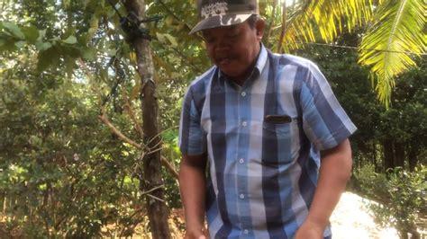 teknik kupas kelapa tua kepepet