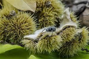 Pflanze Mit Stacheln : kostenlose foto baum natur frucht fallen blume lebensmittel produzieren makro herbst ~ Frokenaadalensverden.com Haus und Dekorationen