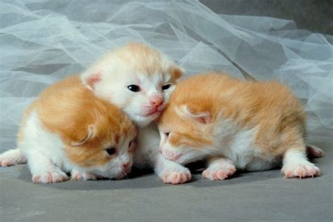 Fun Facts About Newborn Baby Kittens Pets