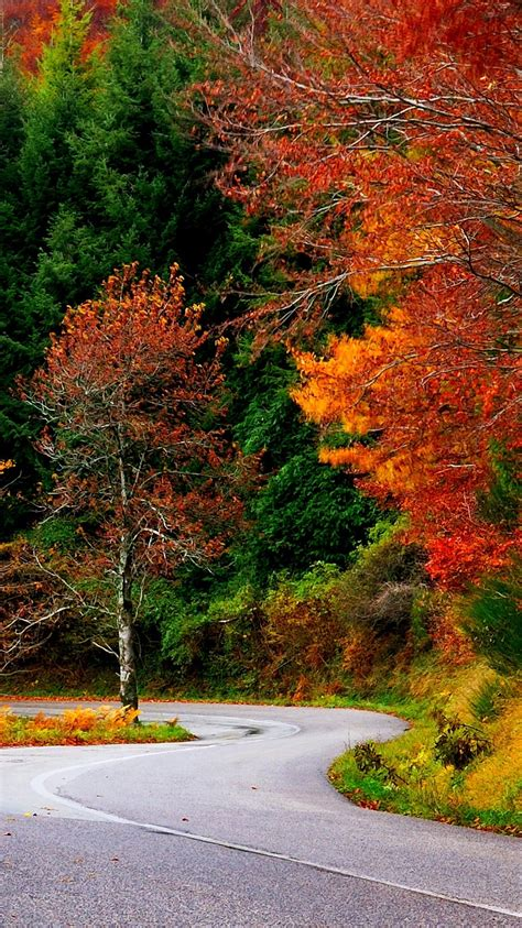 Fall Road Iphone Wallpaper by Forest Autumn Fall Road Leaves Trees Colorful Nature
