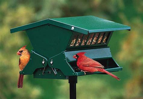 Best Bird Feeder In 2019