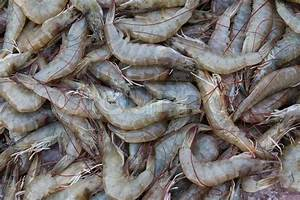 Fresh Shrimp | Stock Photo | Colourbox