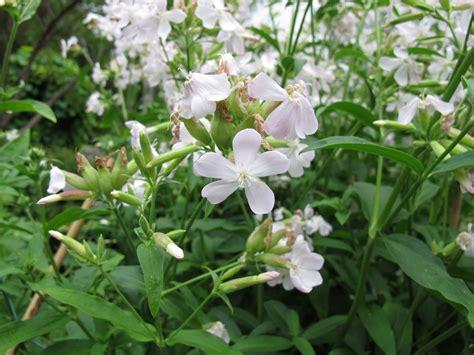 Tipps Zum Pflanzen, Düngen Und Schneiden