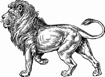 Lion Tattoo Sketch Sketches Hand Walking Famous