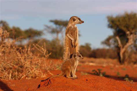 Africa Desert Animals