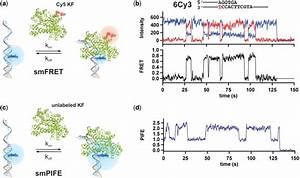 Real time single-molecule measurements of KF binding to ...