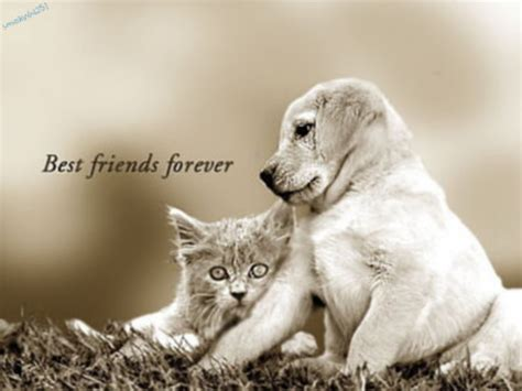 SiVaChAn~~~~~~~~~~~: FRIENDS FOREVER.....