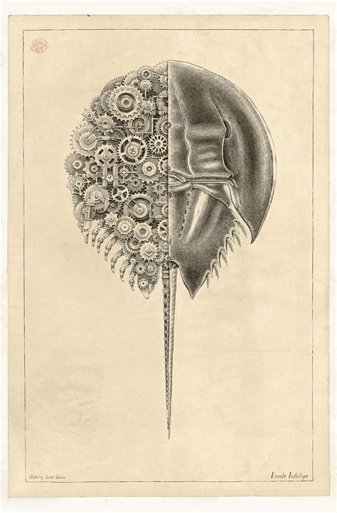 mechanical crustaceans  clockwork insides illustrated
