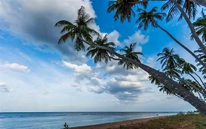 Sri Lanka Sunrise Palm Beach Tropical Trees