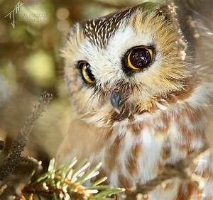 Winter Birding, Calgary-style - a Photo Essay - Bird Canada