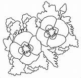 Poppy Coloring Template Pages Colouring Outline Templates Drawing Poppies Pdf California Printable Print Colours Getdrawings Getcolorings sketch template