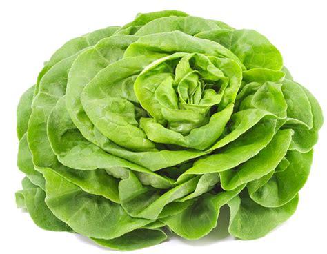image gallery salade verte