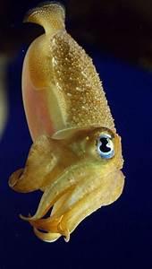 Cuttlefish | Underwater Love | Pinterest