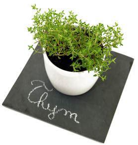 thym cuisine thym bienfaits et vertus pour la santé