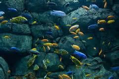 poissons au n 233 on dans l aquarium d eau douce photo stock