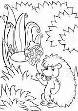Hedgehog Drawing Coloring Pages Getdrawings sketch template