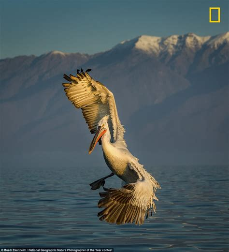 2017 National Geographic Nature