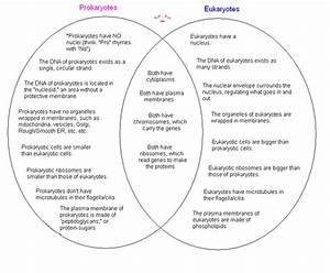 Osmosis And Diffusion Venn Diagram