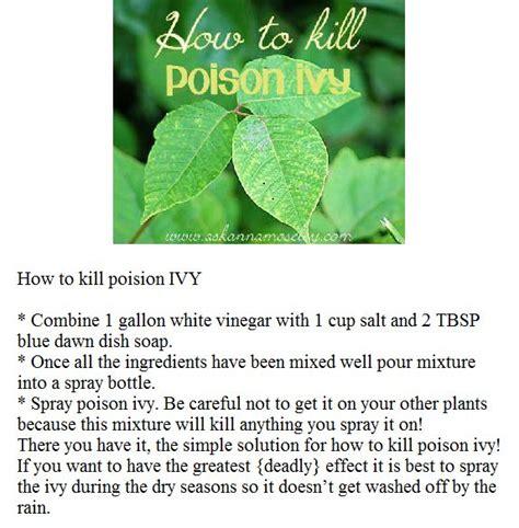 how to kill poison oak diy how to kill poison ivy to do pinterest kill