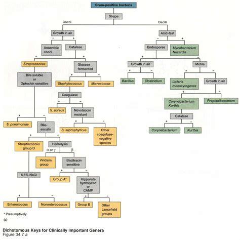 Microbiology Unknown Gram Negative Flow Chart