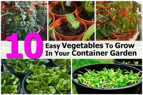 Easy Vegetables To Grow In Your Container Garden