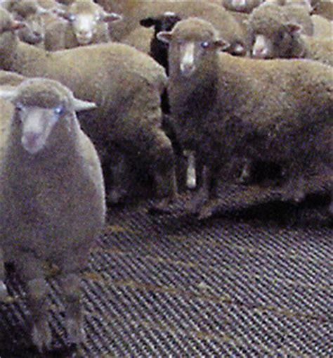 Animal Flooring   Grating Tasmania!