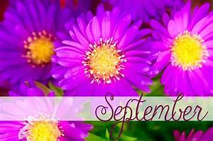 Happy September Birthday! September birthdflower is the ...