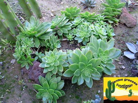 plantes grasses d exterieur photos de conception de