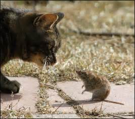 cat and mouse of cat and mouse out city
