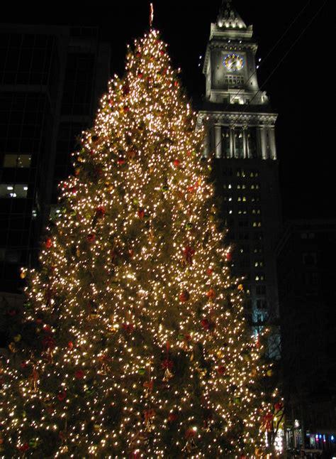 boston s official christmas tree arrives november 21