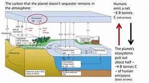 Land Management  U2013 Everything And The Carbon Sink