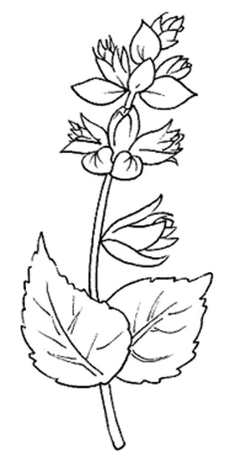 midisegni fiori disegni da colorare fiori disegni per bambini disegni