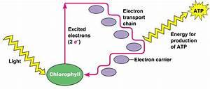Cyclic Photo-phosphorylation