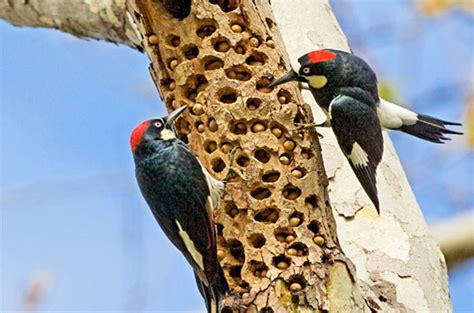 medium sized birds birds blooms