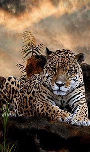 Amazing Tiger Animal Wallpaper iPhone | Wild animal ...