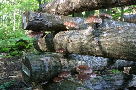 Ganz Viele Pilze Im Garten by Pilze Anbauen 187 Diese Sorten K 246 Nnen Sie Im Eigenen Garten