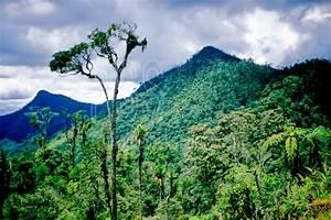 photo of highland jungle by photo stock source tree dualo