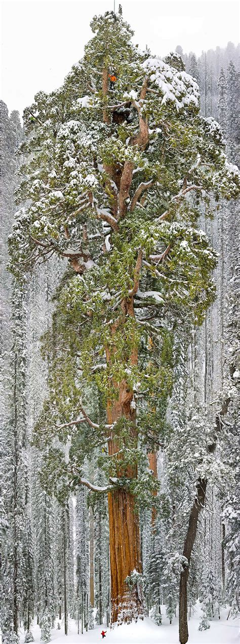 16 Of The Most Magnificent Trees In The World Bored Panda