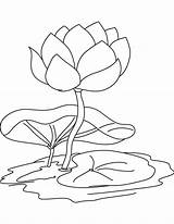 Lily Coloring Water Flower Pad Pages Drawing Flowers Printable Lilies Pads Sheets Line Stencil Adult Popular Getcolorings Recommended Getdrawings Coloringhome sketch template
