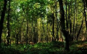 Forest Hd wallpaper - 92231