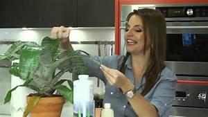 Como limpiar tus plantas naturalmente youtube for Como limpiar la vejiga naturalmente