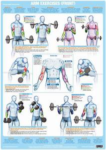Arm Muscles  Front  Weight Training Exercise Chart