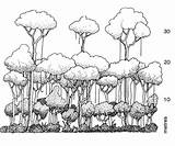 Rainforest Layers Drawing Tree Tropical Diagram Forest Draw Trees Animals Sketch Ecosystem Canopy Plants Facts Layer Funny Sketches Stratification Habitat sketch template