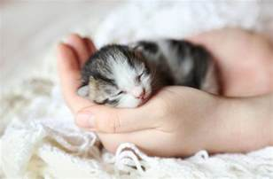 cats and newborns 10 interesting facts about newborn kittens petmd