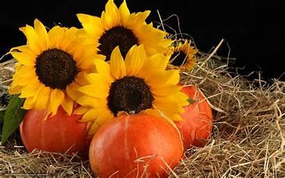 Pumpkin Pumpkins Sunflowers Wallpapers Desktop Flowers Fruits