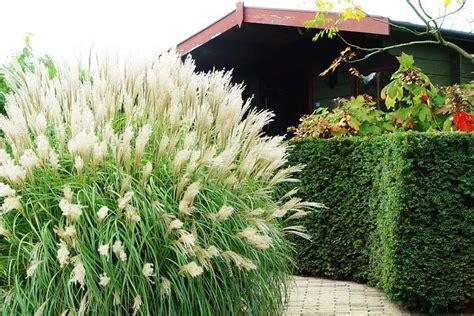 Ziergräser Im Garten Pflanzen & Pflegen Gartentechnikde