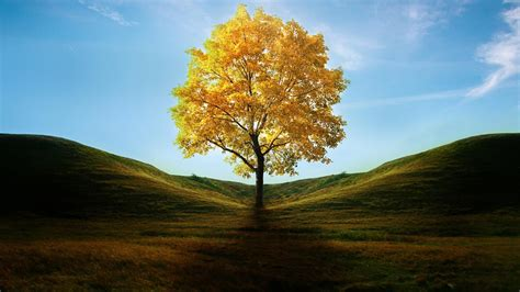 Beautiful Tree Wallpaper For Desktop by Tree Wallpapers Best Wallpapers