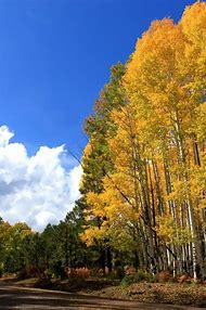 Arizona White Mountains Fall