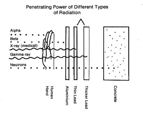 radiation power penetration penetrating types particles different radioactive type most cells living biological alpha nuclear gamma beta body effects damage