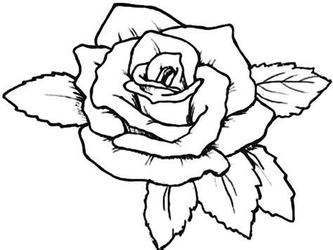 15 gambar mewarnai bunga berbagai jenis mudah
